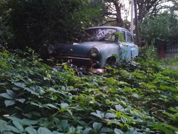 Воронежцев привел в восторг автохлам, воссоединившийся с природой