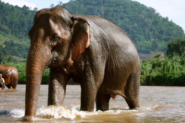 Ученые: Пойманные дикие животные сокращают себе жизнь