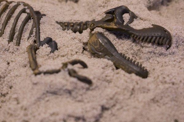 Археологи нашли следы динозавров в Китае