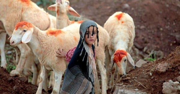 Сегодня мусульмане всего мира отмечают великий праздник Курбан-байрам