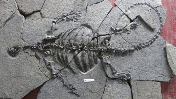 В Китае найдены уникальные окаменелости черепахи без панциря