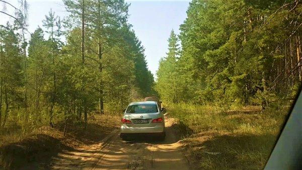 Жители Лосево валят деревья на путях объезда пробок на М4 «Дон» – соцсети