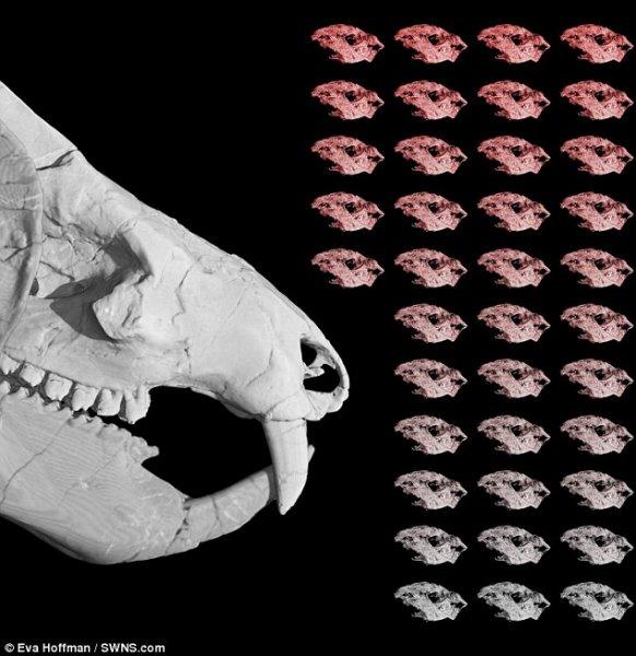 Ученые: Обнаружена гигантская доисторическая крыса с клыками