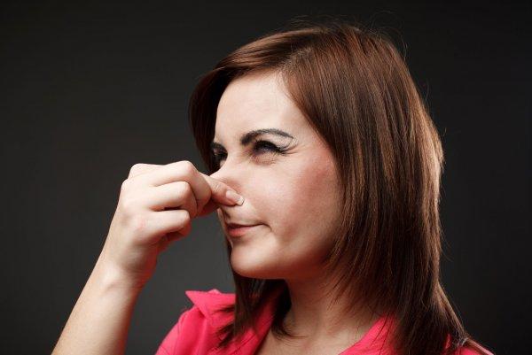 «Ну и вонь»: Ученые объяснили, почему мышиная моча и клубника не пахнут одинаково