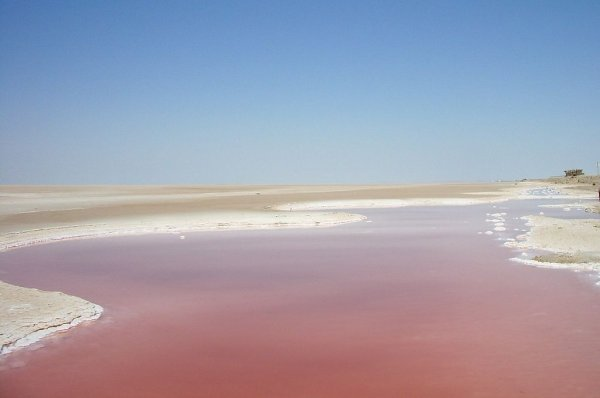 В Крыму возобновили добычу «молодильной» соли из розового озера