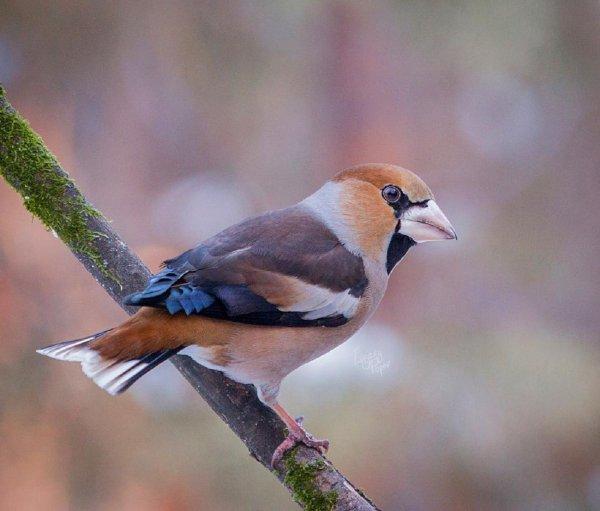 В Новосибирске появились экс-краснокнижные птицы
