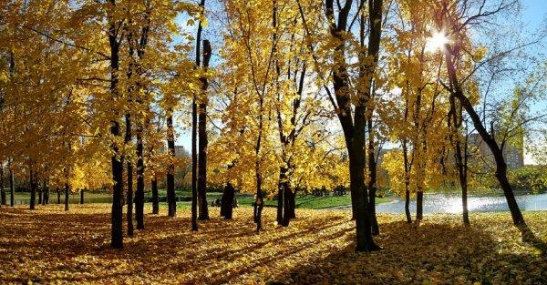 19 октября в Москве побит температурный рекорд 137-летней давности