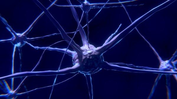 Ученые назвали причину уникальности человеческого мозга