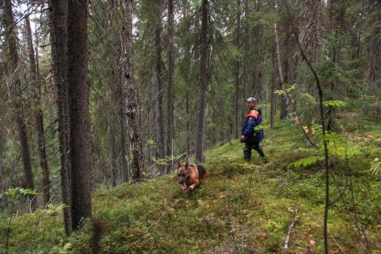 В югорском лесу спасатели нашли труп исчезнувшего мужчины