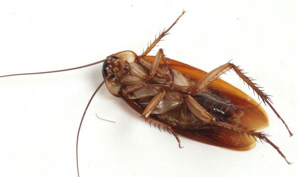 От судьбы зомби тараканов спасли пинки