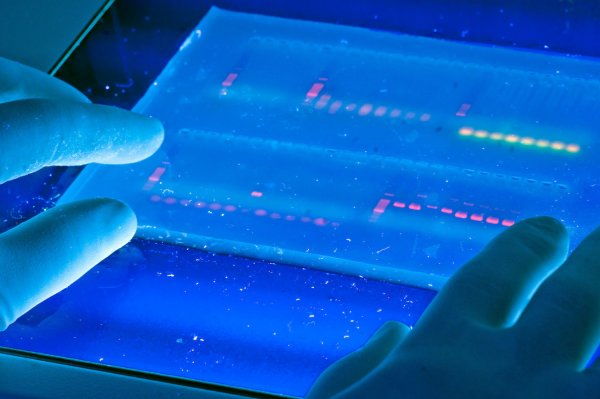ДНК может рассказать о возрасте и всех привычках человека – учёные