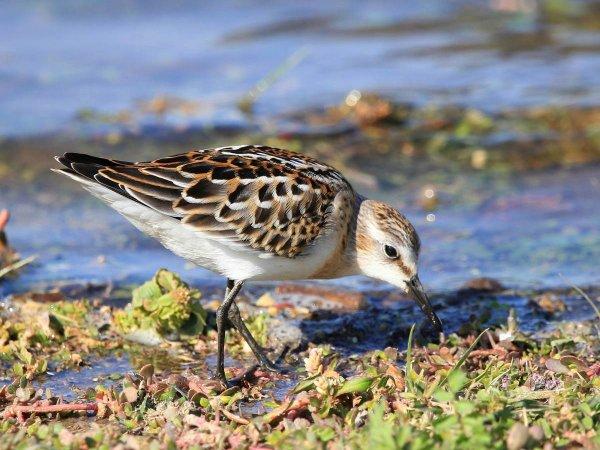 Арктические птицы вымирают из-за глобального потепления – Ученые