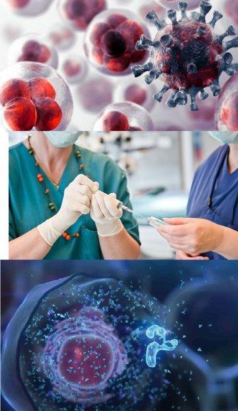 Учёные открыли универсальное средство против рака