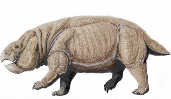Археологическая находка из Польши переворачивает представления о происхождении млекопитающих