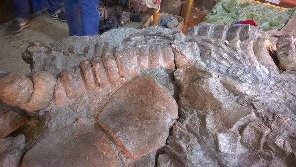 Окаменелые останки древнейшего млекопитающего обнаружили в Польше