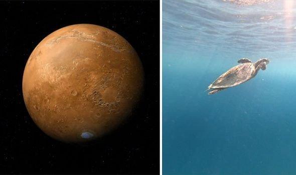 Ученые NASA на Марсе нашли останки древних черепах