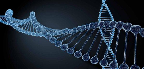 ВОЗ возьмет под свой контроль генетическую модификацию людей