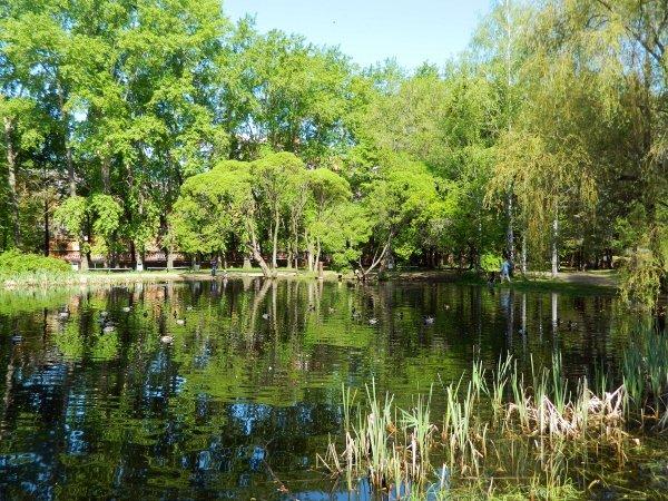 Ученые: Жизнь в «зеленых» районах приносит большую пользу сердцу