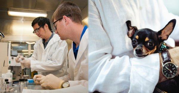 Учёные нашли ген, отличающий человека от животных