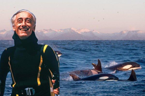 «Конец эпохи китовой тюрьмы»: Заточённых косаток Приморья отпустят в естественную среду обитания